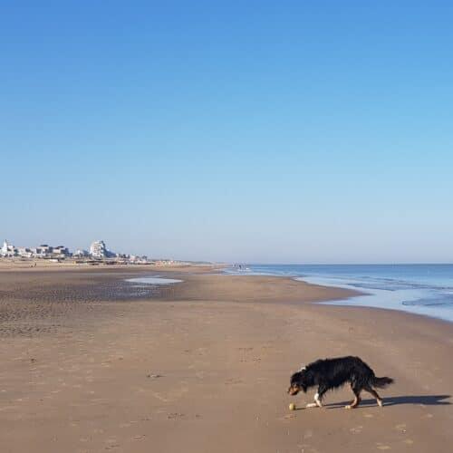 A beach for everyone